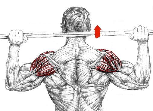 Muscles travaillés en développé épaules